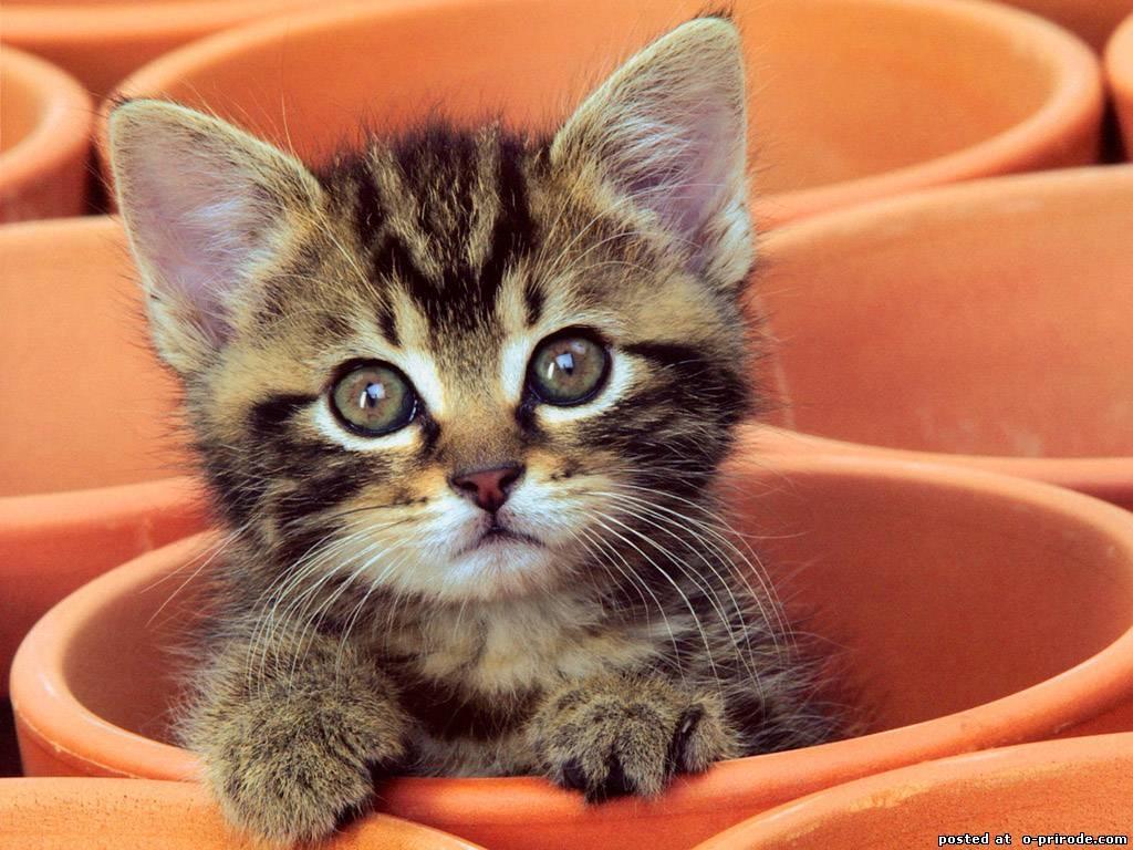 Обои на телефон котята красивые (4)