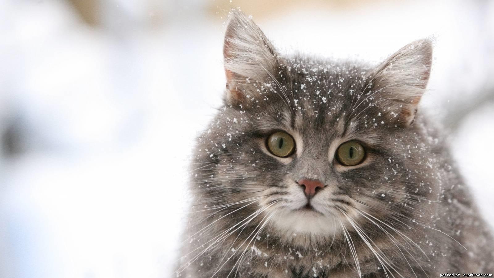 Обои на телефон котята красивые (7)