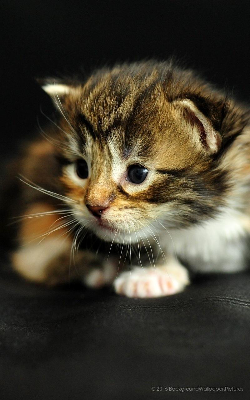Обои на телефон котята красивые (8)