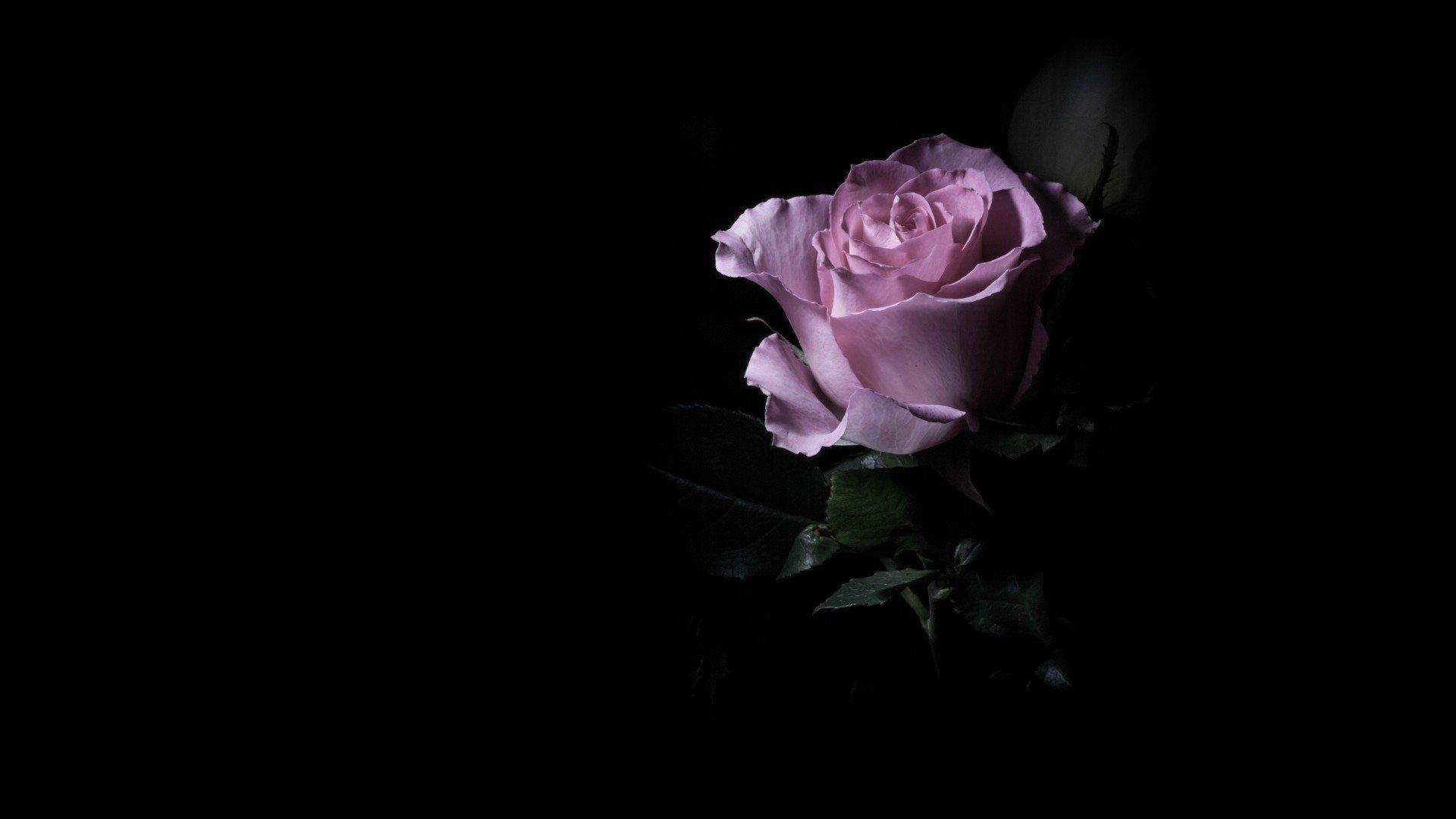Обои на телефон роза на черном фоне   подборка (23)