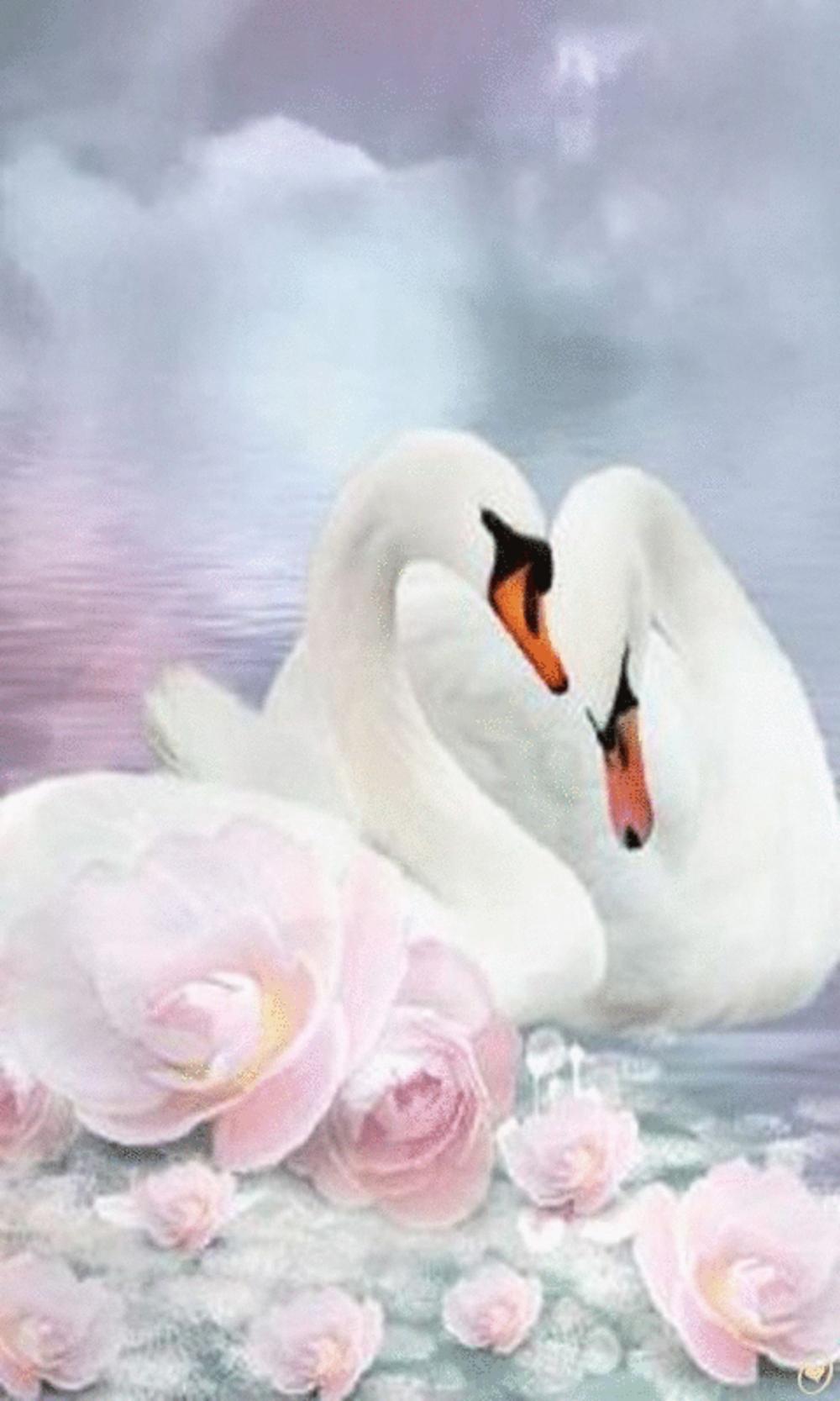 Обои на телефон с лебедями (24)