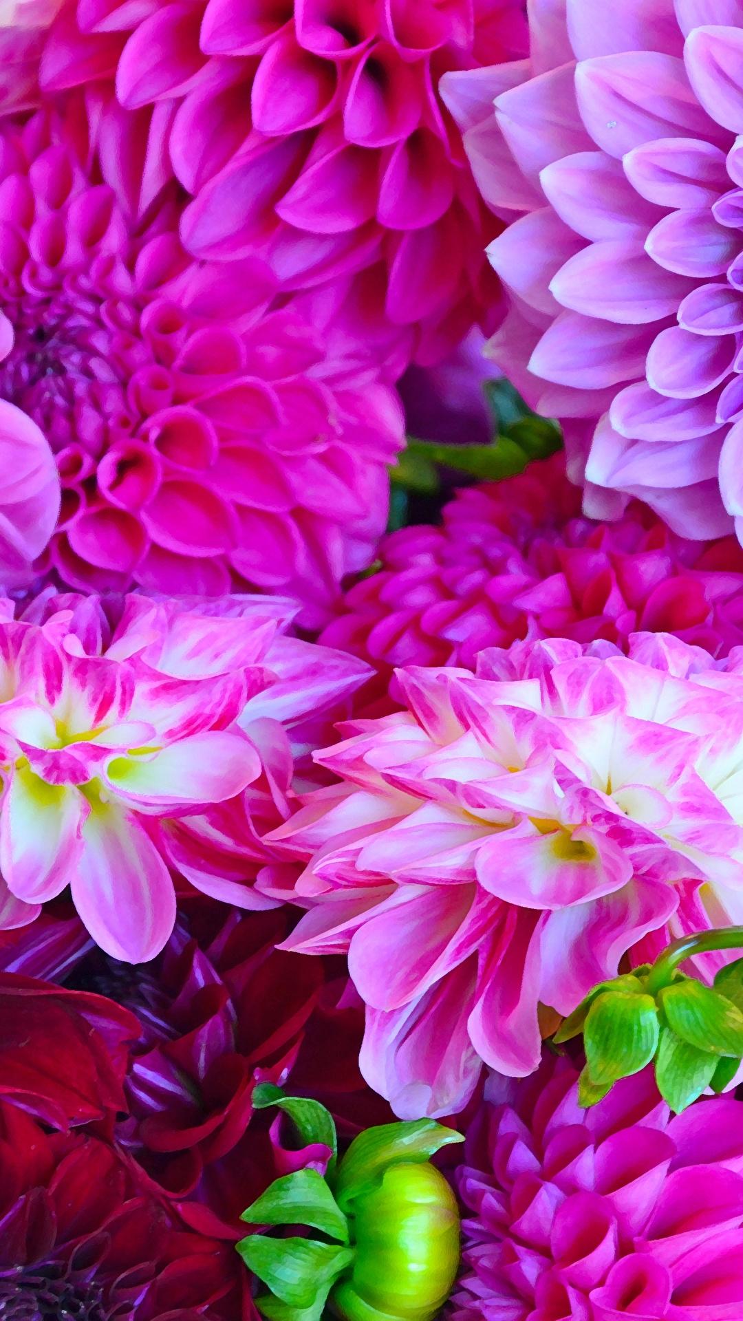 Обои на телефон цветы фиолетовые  Обои на Телефон Цветы
