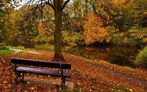 Обои осень в парке для рабочего стола   лучшие фото (14)