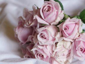 Обои розы нежные на рабочий стол (24)