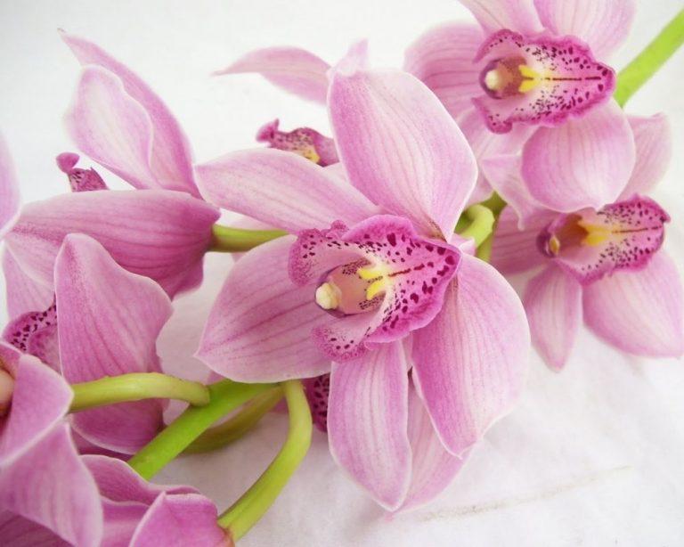 Для гостей, орхидеи открытки фото