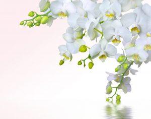 Орхидеи на рабочий стол заставка019