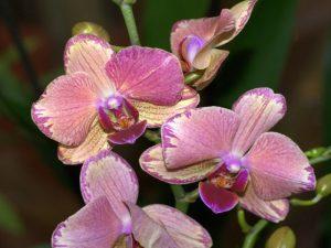 Орхидеи фото в хорошем качестве   подборка 027