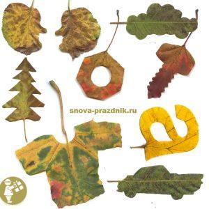 Осенние деревья фото с названиями   подборка 026