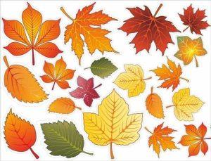 Осенние листья картинки и рисунки 022