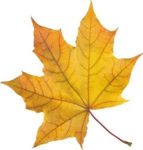 Осенний листик картинки для детей 027