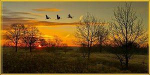 Осень журавли летят фото и картинки 013