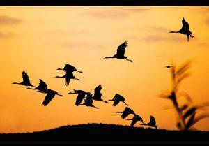 Осень и птицы на юг улетели   картинки 025