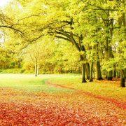 Осень обои на рабочий стол скачать бесплатно (17)