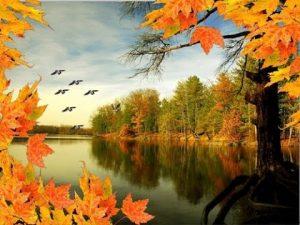 Осень рисунок птицы улетают   подборка028