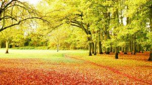 Осень темы для рабочего стола   скачать бесплатно (25)