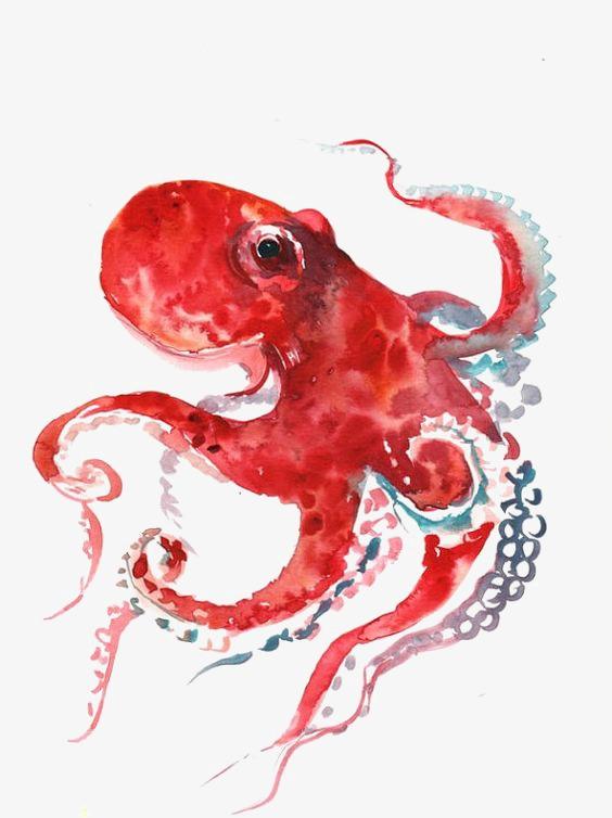 Осьминог акварель   красивые картинки025