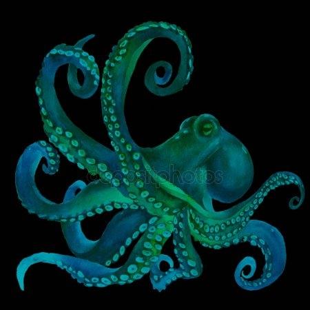 Осьминог акварель   красивые картинки026