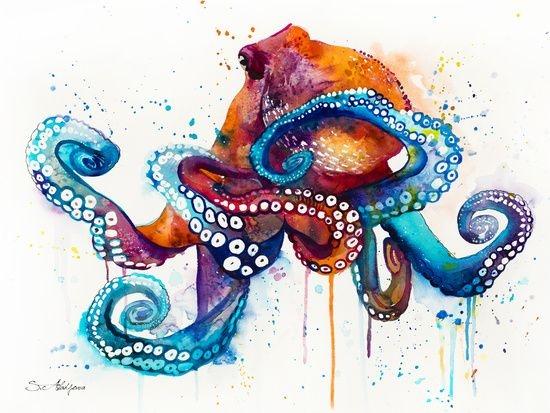 Осьминог акварель   красивые картинки027