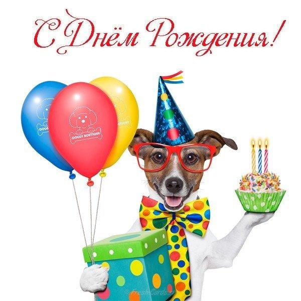 Открытка с Днем Рождения с собакой мужчине (1)