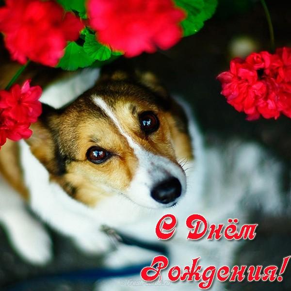 Открытка с Днем Рождения с собакой мужчине (12)