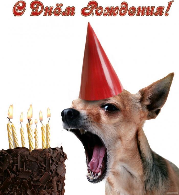 Открытка с Днем Рождения с собакой мужчине (13)