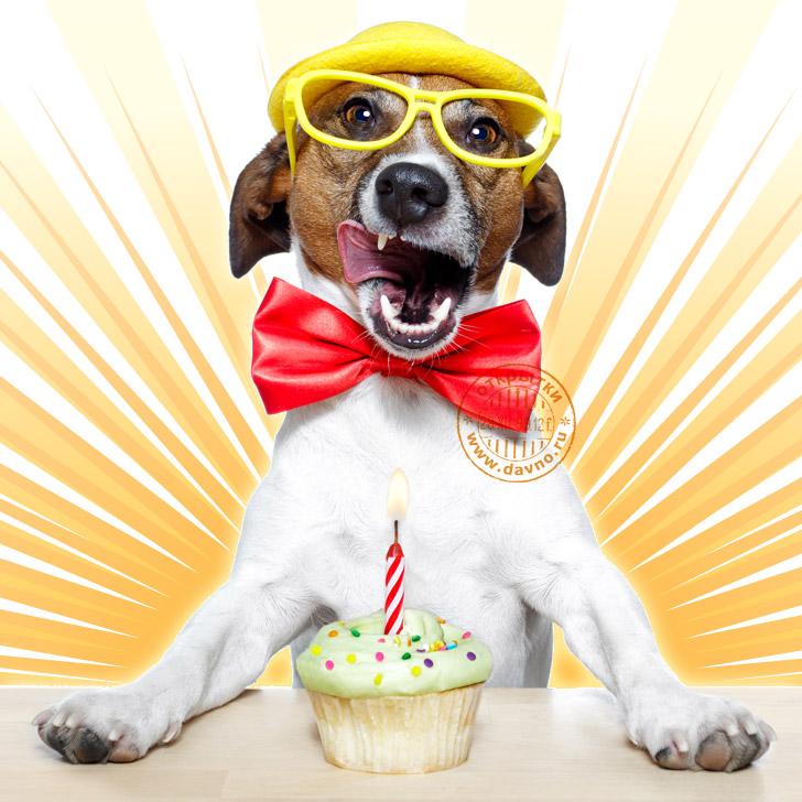 Открытка с Днем Рождения с собакой мужчине (15)