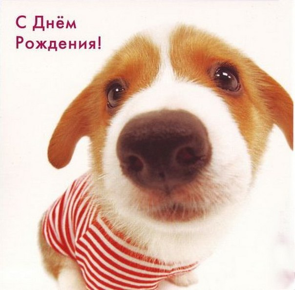 Субботы, поздравление с днем рождения открытка собака