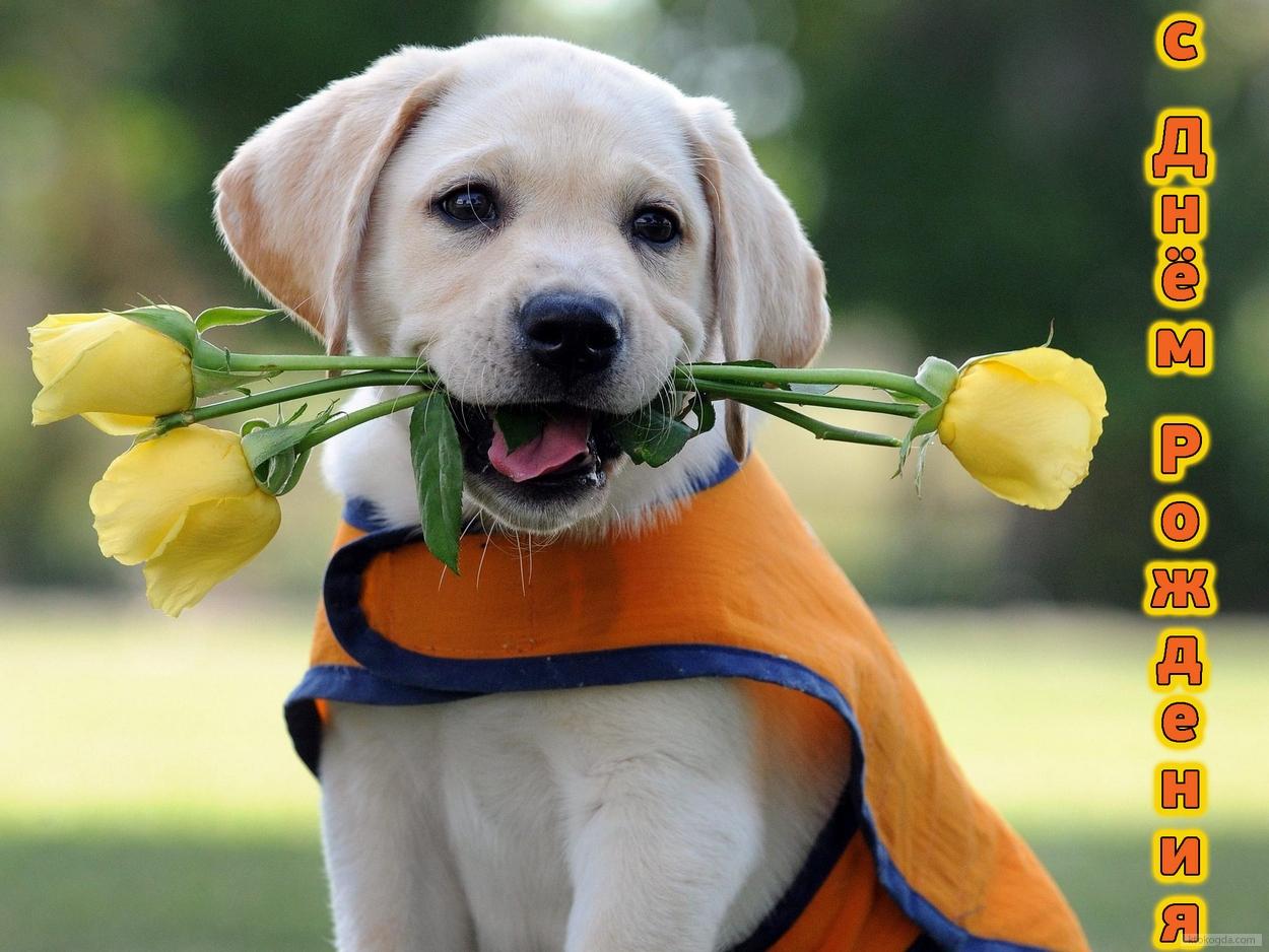 Открытка с Днем Рождения с собакой мужчине (17)