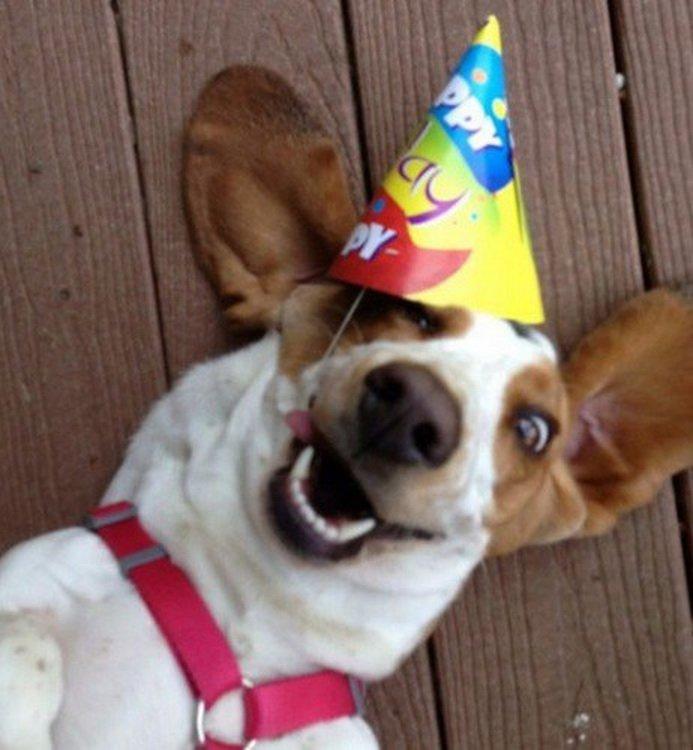 Открытка с Днем Рождения с собакой мужчине (19)