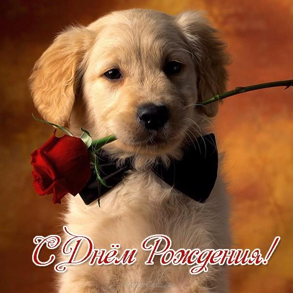 Открытка с Днем Рождения с собакой мужчине (20)