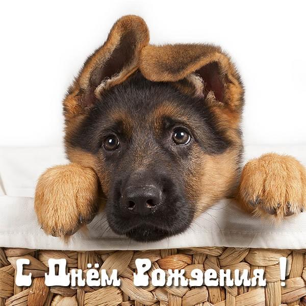 Открытка с Днем Рождения с собакой мужчине (22)