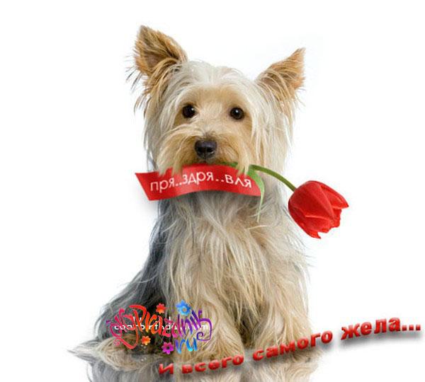 Открытка с Днем Рождения с собакой мужчине (23)