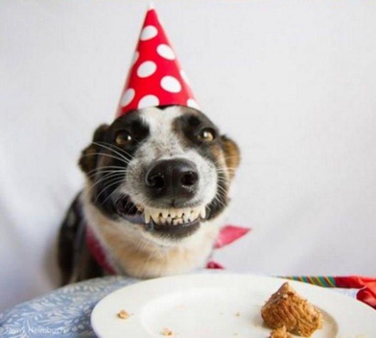 Прикольные картинки с днем рождения с собакой