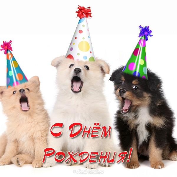 Открытка с Днем Рождения с собакой мужчине (27)