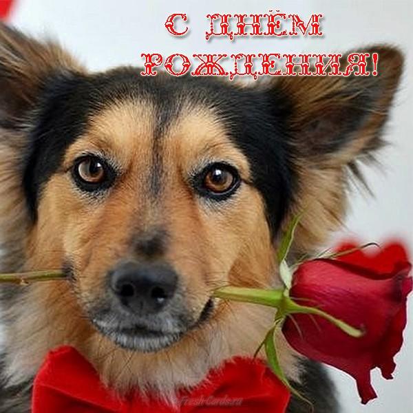 Открытка с Днем Рождения с собакой мужчине (3)
