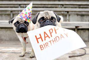 Открытка с Днем Рождения с собакой мужчине (35)