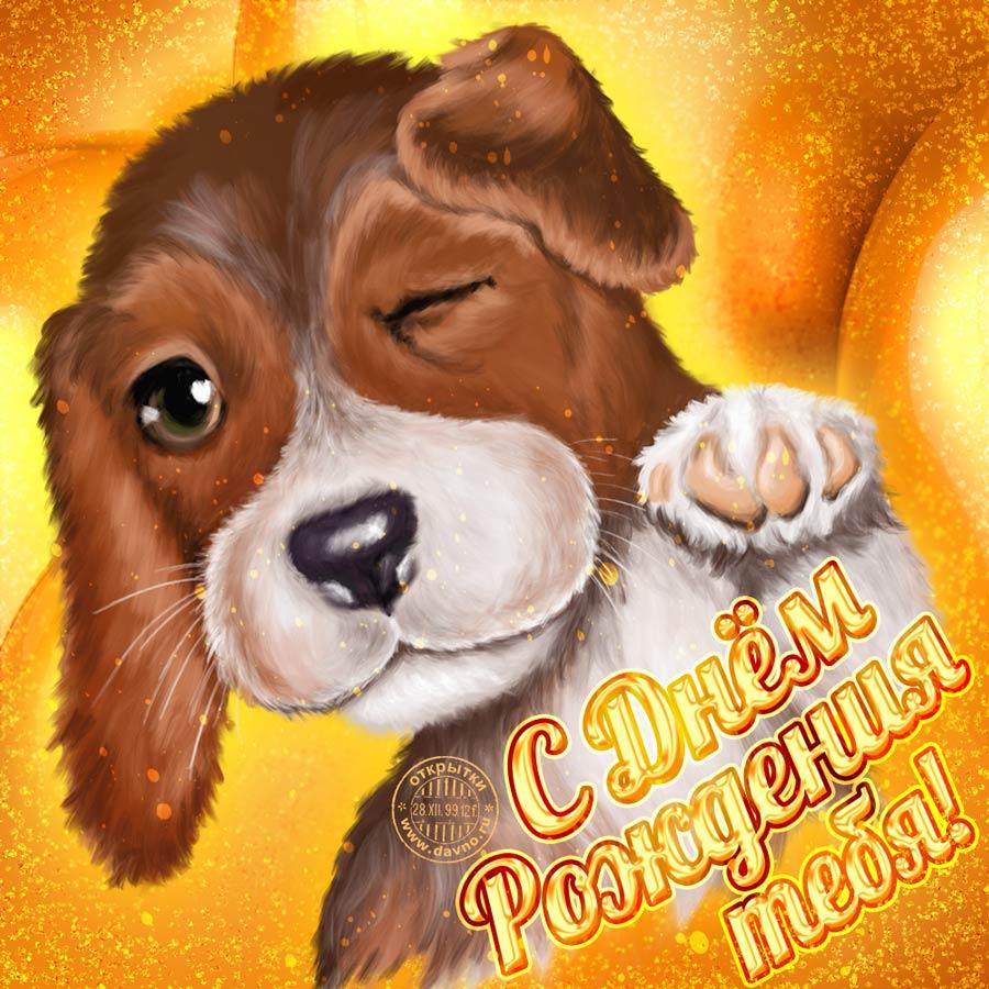 Открытка с Днем Рождения с собакой мужчине (4)