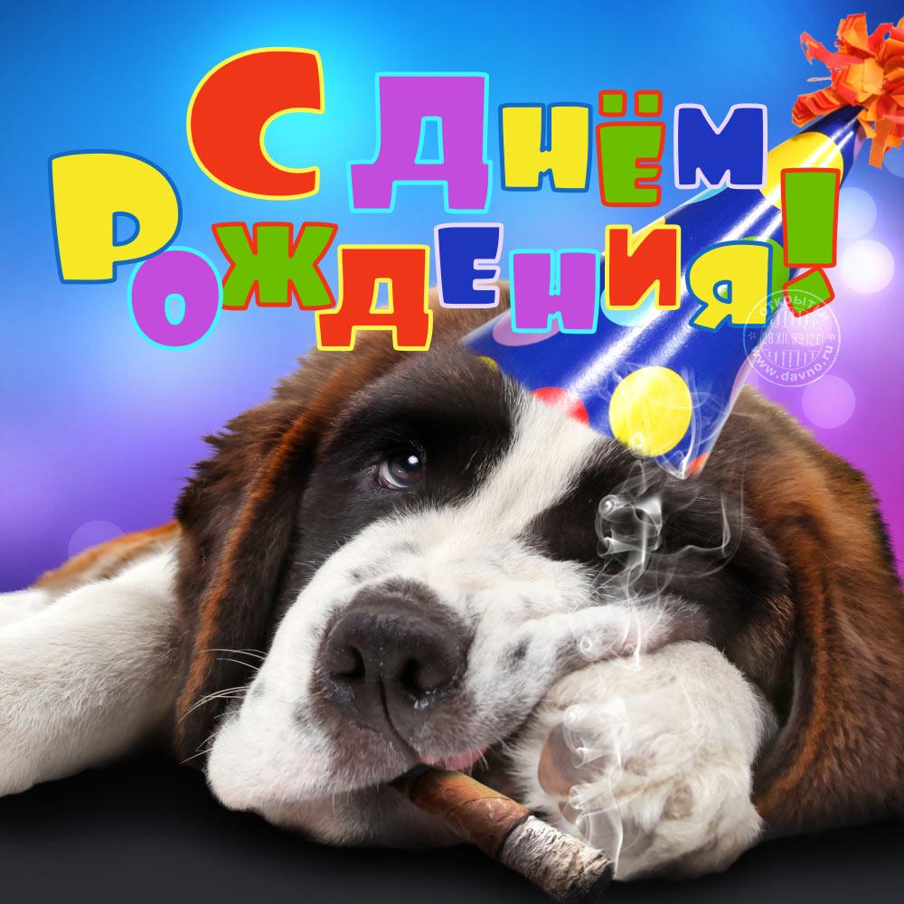 Открытка с Днем Рождения с собакой мужчине (8)