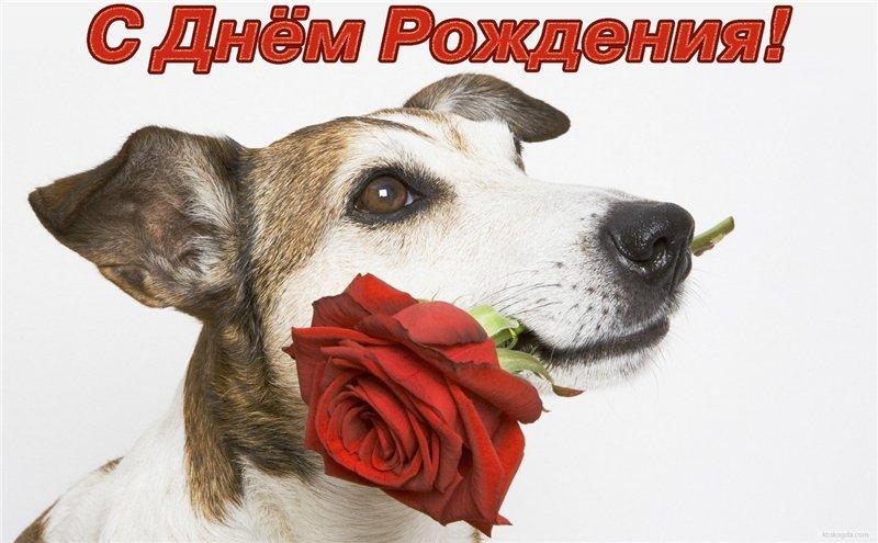 Открытка с Днем Рождения с собакой мужчине (9)