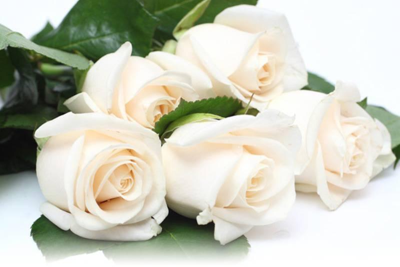 с днем рождения любимая картинки белые розы можно просто