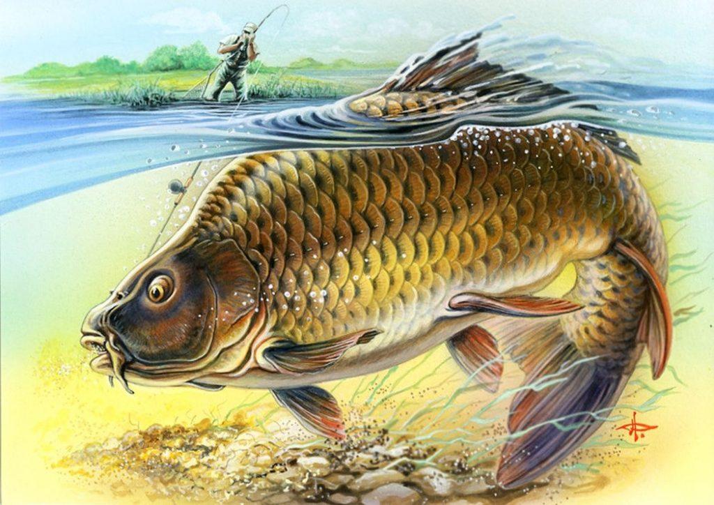 входе картинки для декупажа рыбалка в хорошем качестве конечно