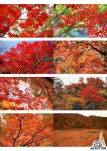 Очень красивые осенние картинки 021