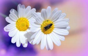 Очень нежные красивые цветы   подборка 029
