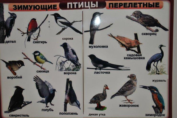 продуктивные кусты название перелетных птиц фото все это