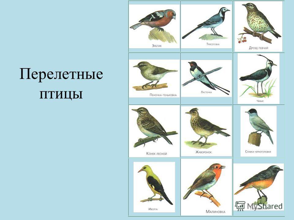 Перелетные птицы картинки с надписью, открытка чистым