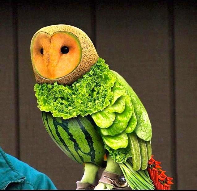Поделка сова из овощей фото 001
