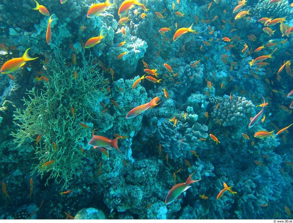Под водой в океане фото 002