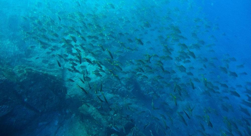 Под водой в океане фото 019