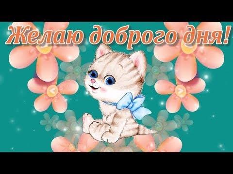 Пожелание доброго дня фото и картинки019