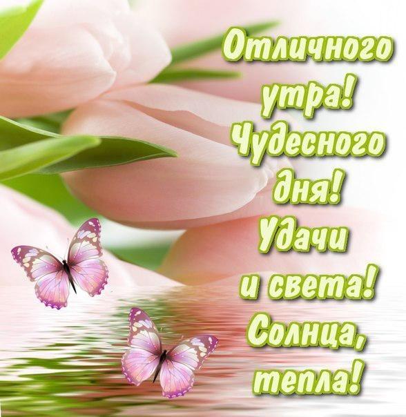 Пожелание доброго дня фото и картинки025